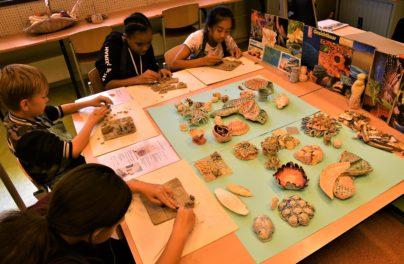 http://www.zuiderlichtcollege.nl/wp-content/uploads/AMA_2242.jpg